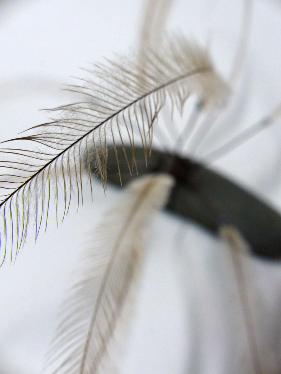 Flying Emu Claw – Heather Cowie 2